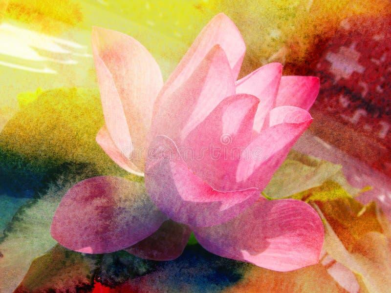 Lotus rose d'aquarelle images libres de droits