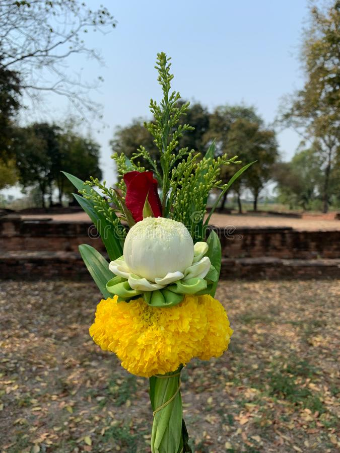 Lotus rose marigold  pay homage stock photos