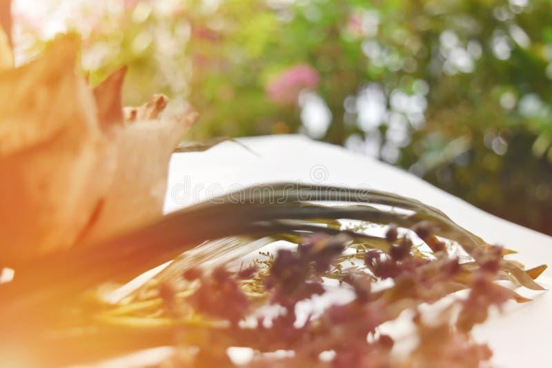 Lotus secó las hojas de la deshidratación en fondo del bokeh fotografía de archivo libre de regalías