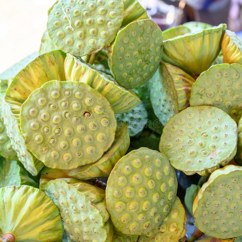 Lotus seed pods royalty free stock images