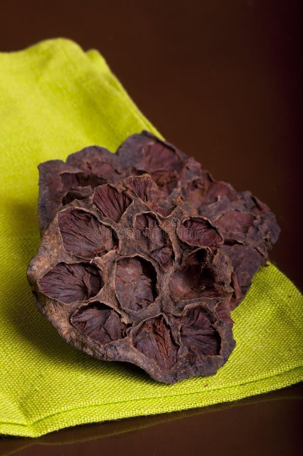 Lotus Seed Pot é nomeada igualmente Lian Fang imagens de stock