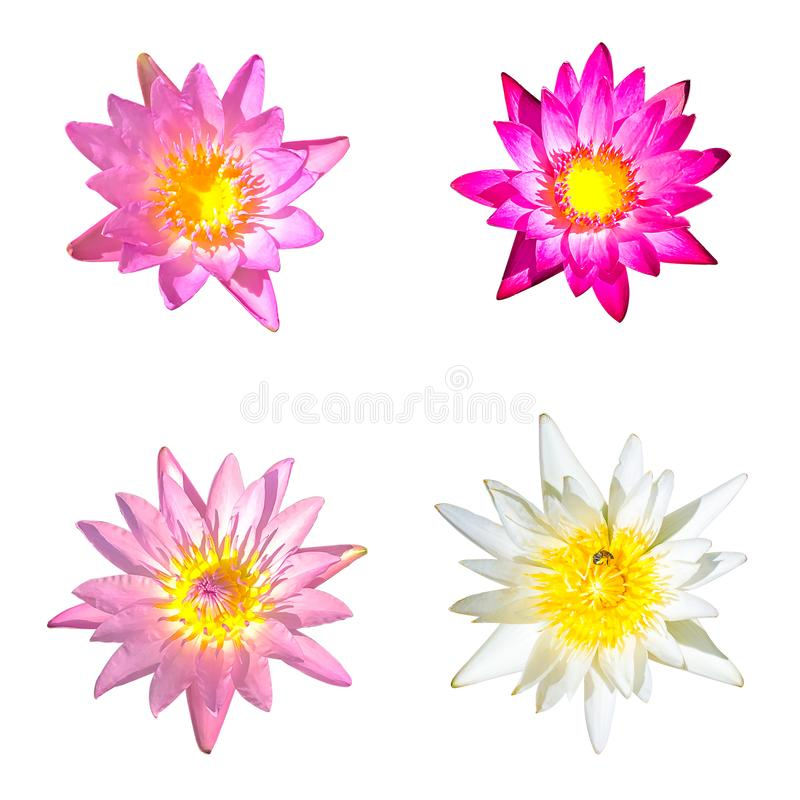 Lotus set isolated on white background with clipping path stock photo