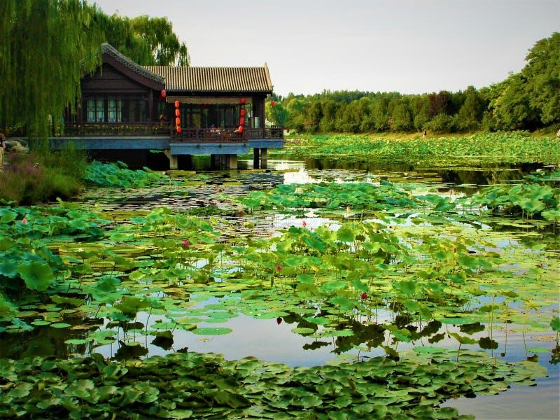 Lotus, sjö, natur, miljö och traditionellt kinesiskt hus royaltyfri bild