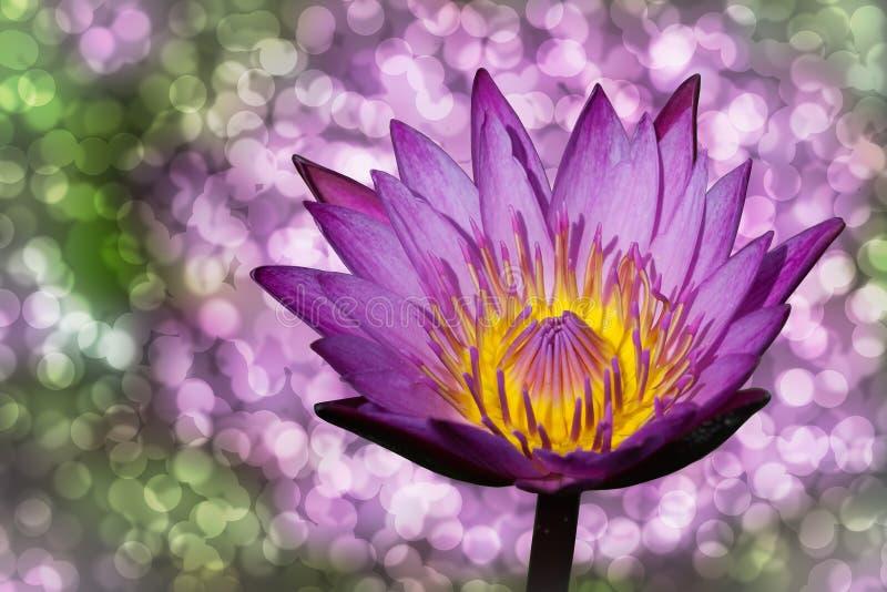 Lotus und Bokeh lizenzfreie stockbilder