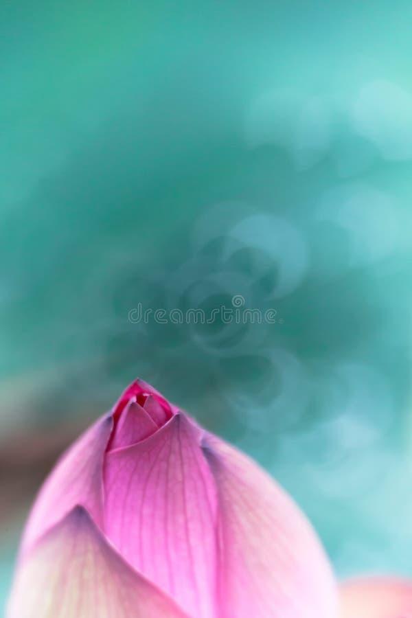 Lotus van de droom stock foto