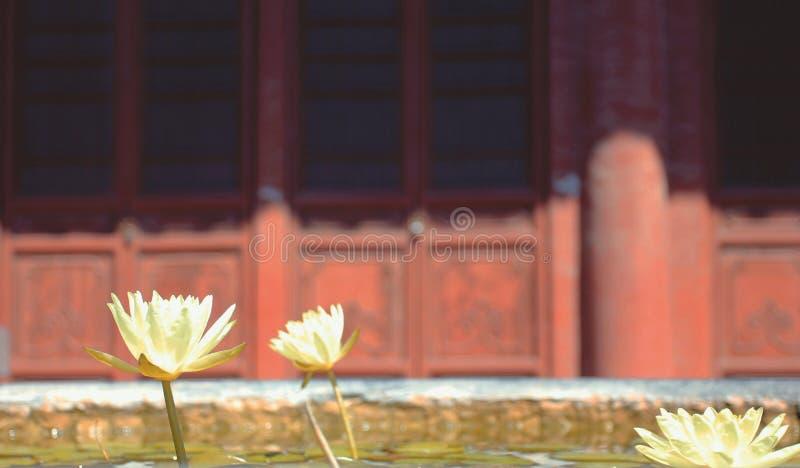 Lotus van de tempel stock afbeelding
