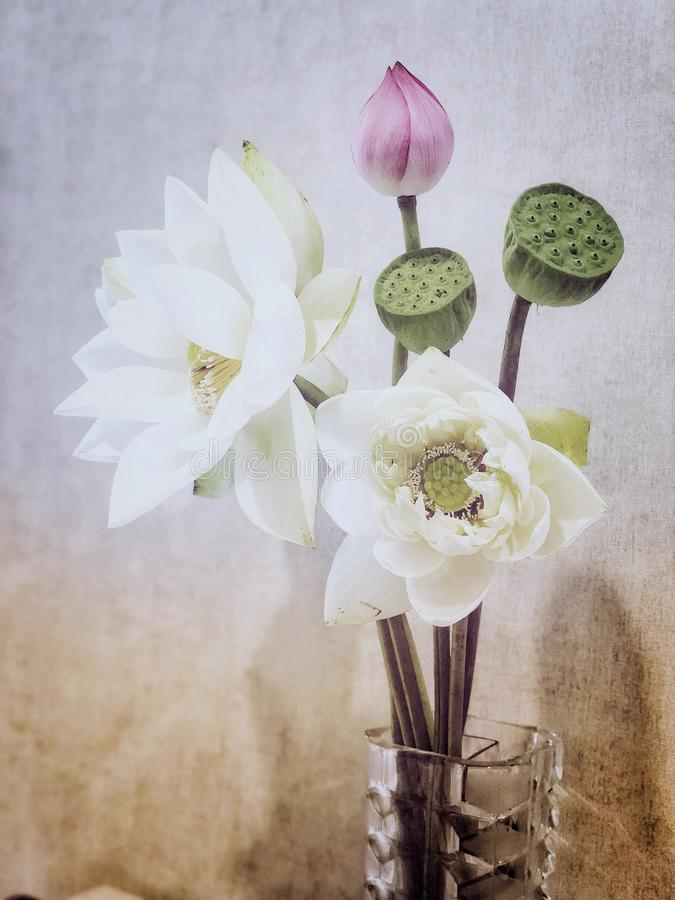 Lotus, bud and seedpot in the vase stock image