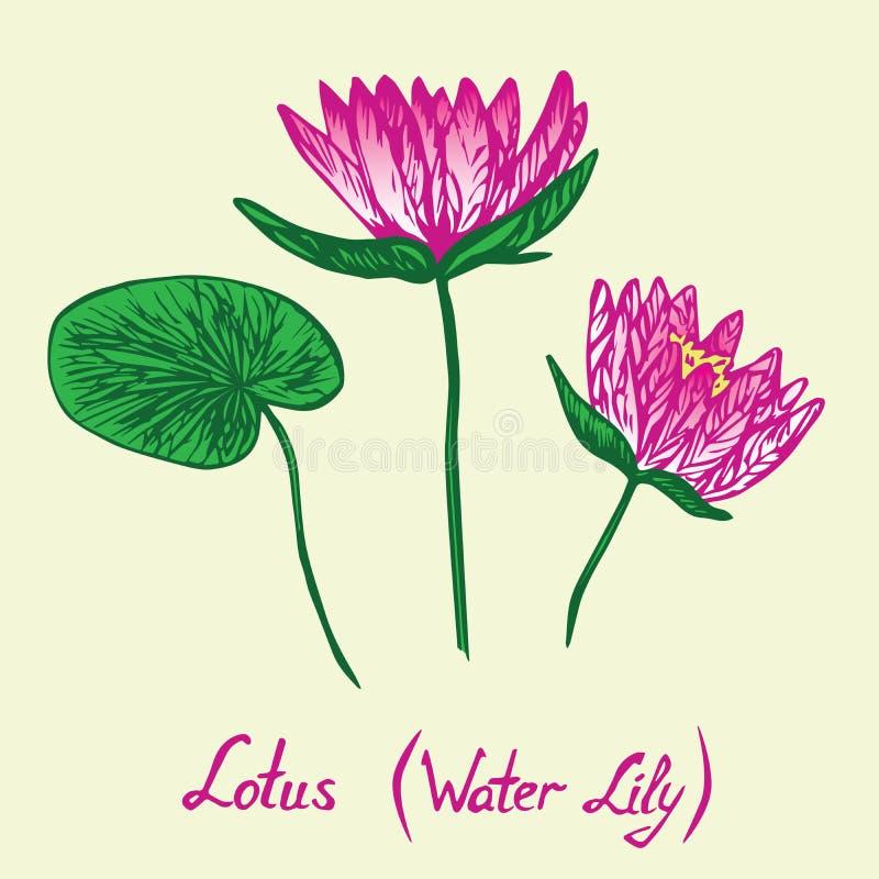 Lotus Water Lily-Blumen und -blätter eingestellt, mit Aufschrift stock abbildung