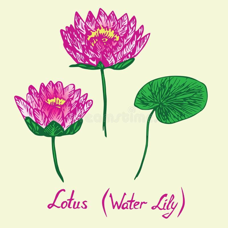 Lotus Water Lily-Blumen und -blätter eingestellt, mit Aufschrift lizenzfreie abbildung