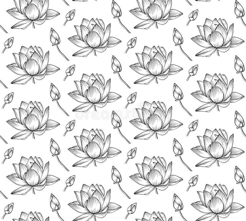 Lotus Flower Line Drawing Vector Free Download : Lotus water lily vector beautiful flower line black and