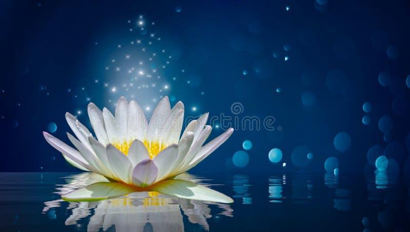 Lotus white light purple floating light sparkle background. Lotus white light purple floating  light sparkle background stock photo