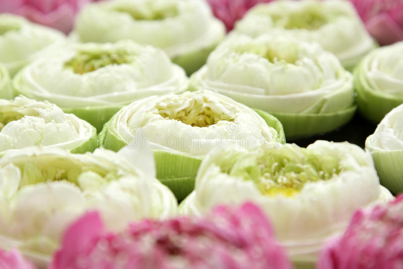 Lotusbloem spa stock foto