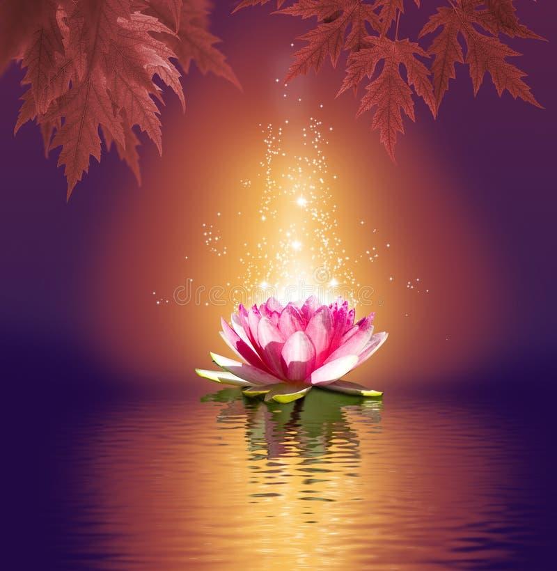 lotusbloembloem op waterclose-up stock afbeelding