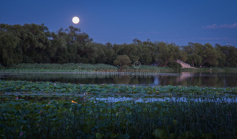 lotusbloemvijver bij nacht royalty-vrije stock foto's