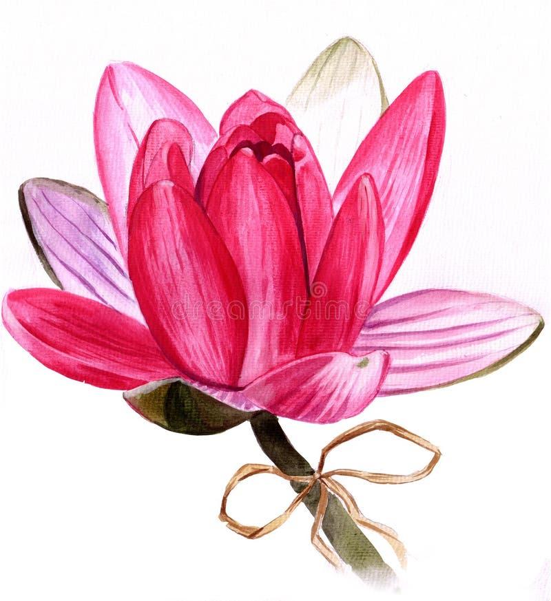 lotusblomma royaltyfri illustrationer