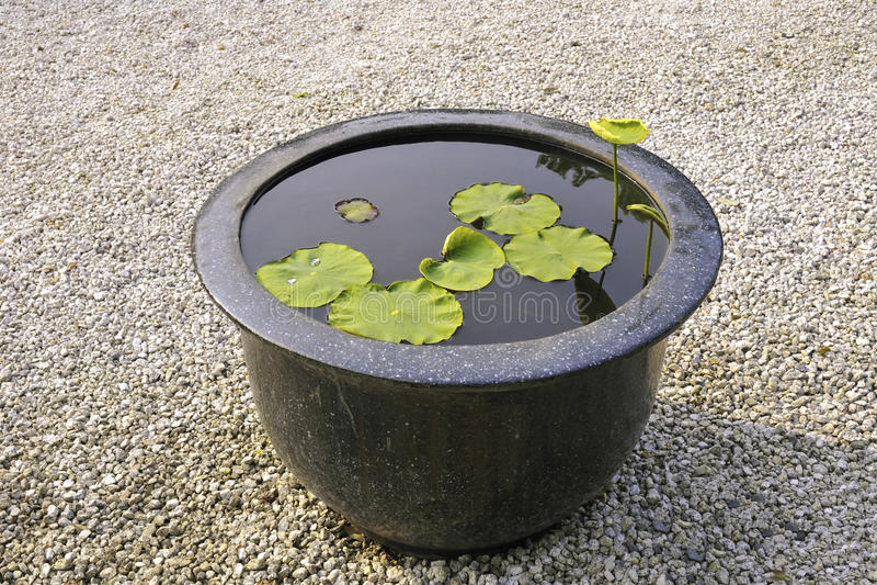 Download Lotusblomma i stor bunke arkivfoto. Bild av quiet, naturligt - 27280438