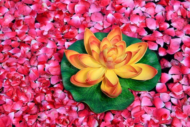 Lotusblommablomma royaltyfri fotografi