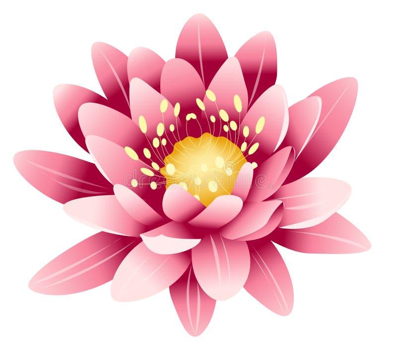 lotusblommapink vektor illustrationer