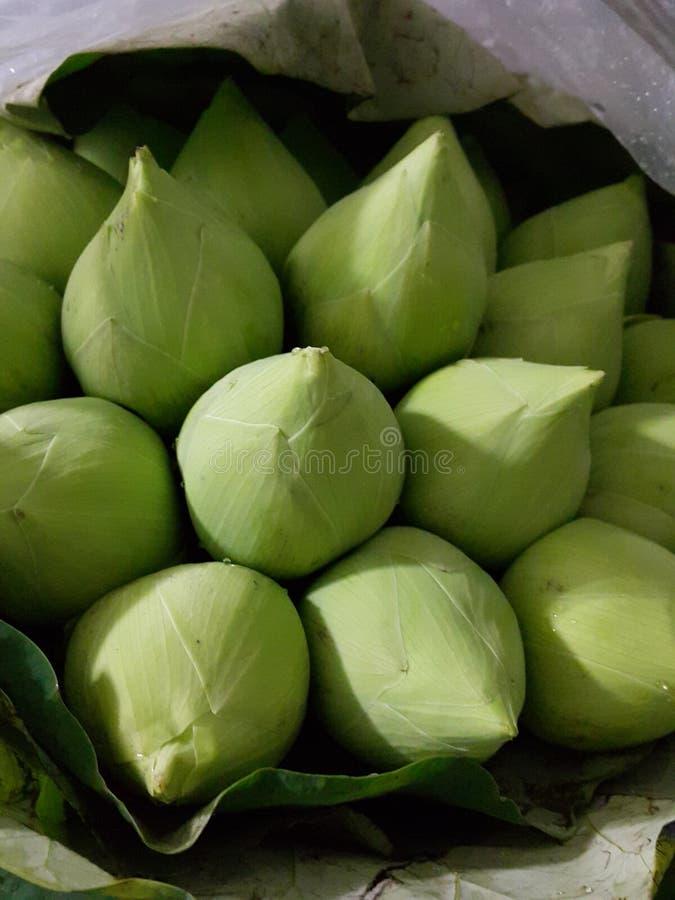 lotuses arkivfoton