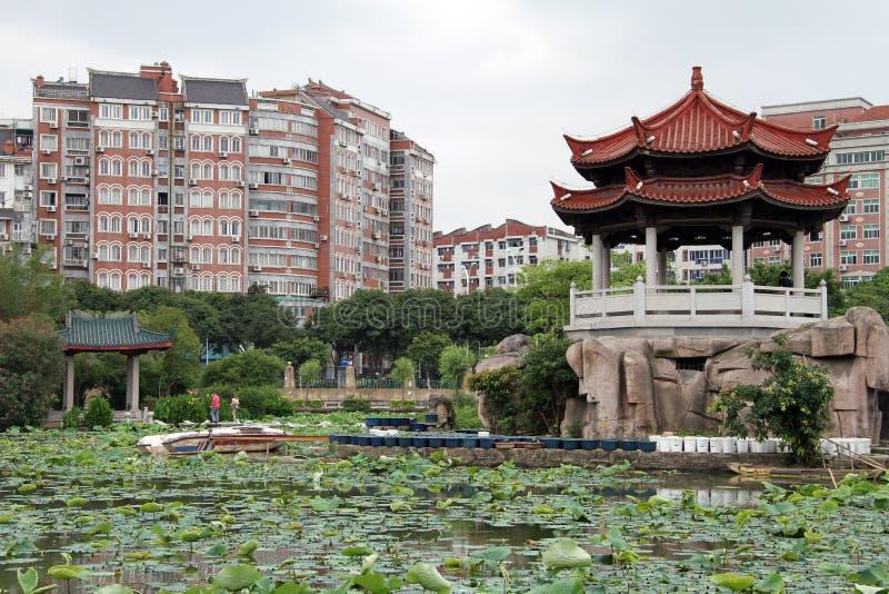 lotuses quanzhou obrazy royalty free