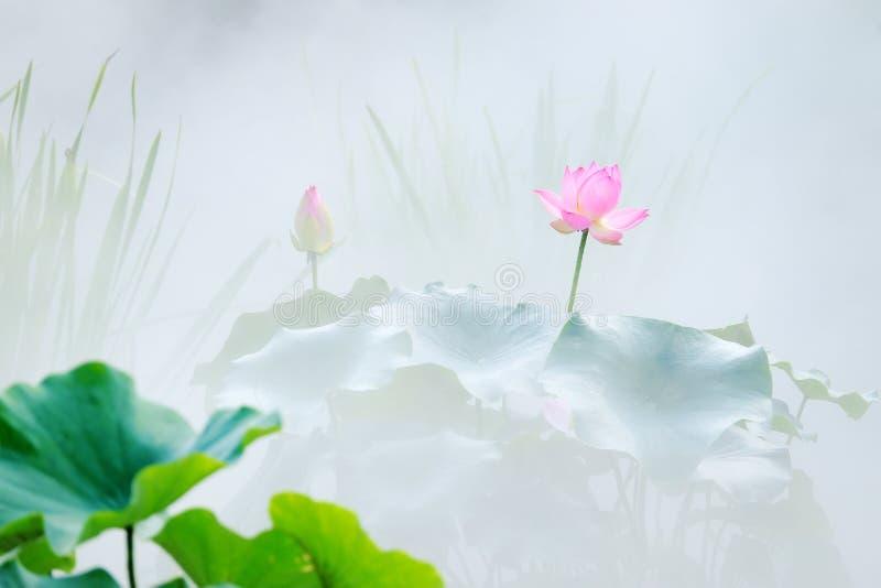 Lotusteich im Nebel lizenzfreie stockbilder