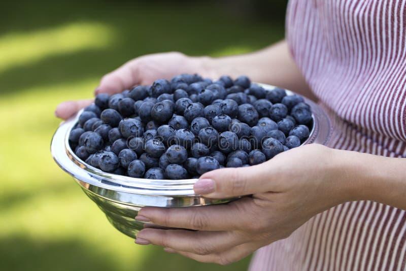 Louça com as uvas-do-monte nas mãos da mulher Curva da terra arrendada da jovem mulher fotografia de stock royalty free