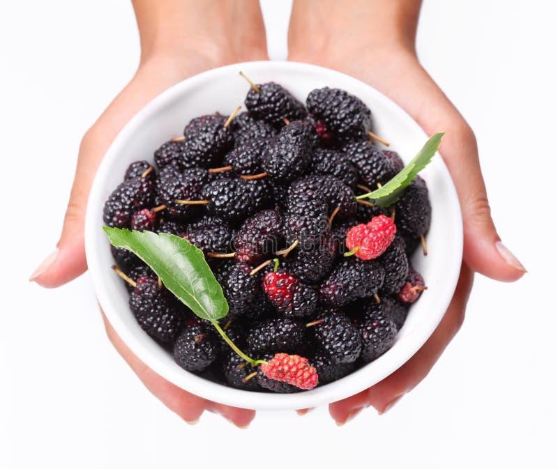 Louça com mãos da mulher do mulberriesin. imagem de stock royalty free
