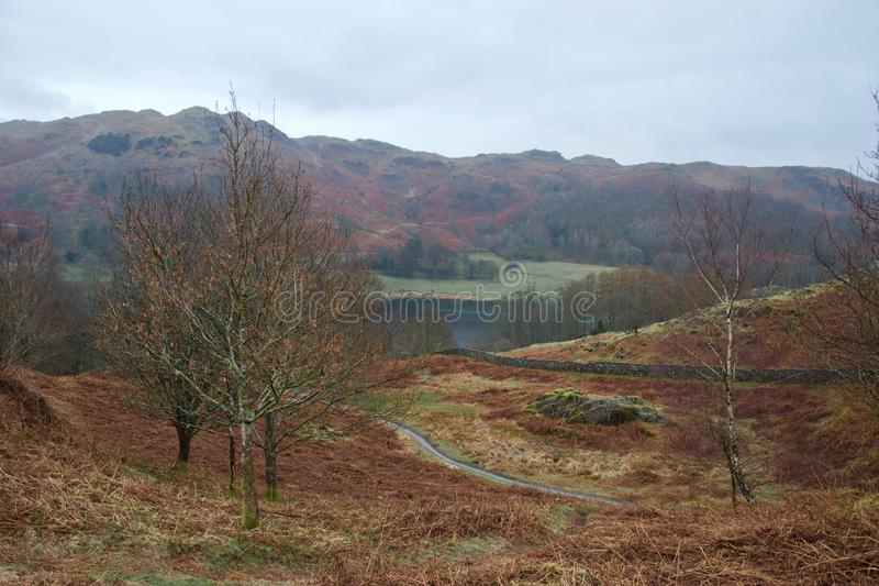 Loughrigg, Lake District: valley and tarn with bare trees and brown bracken. Valley in the Lake District Cumbria, England. Small tarn mountain lake in front of a royalty free stock photography