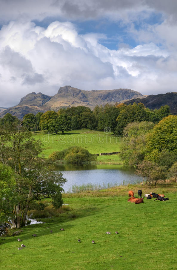 Loughrigg Tarn, portrait. Loughrigg Tarn in late Summer. The English Lake District stock photos