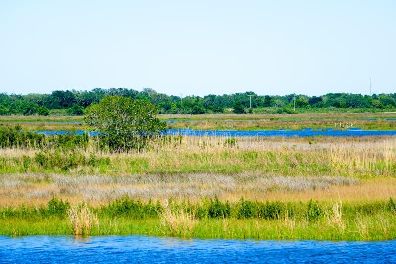 Louisiana-Bayou-Sumpfgebiete lizenzfreie stockfotos