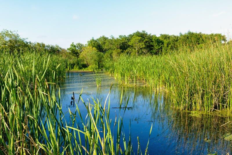 The Louisiana Marsh royalty free stock image