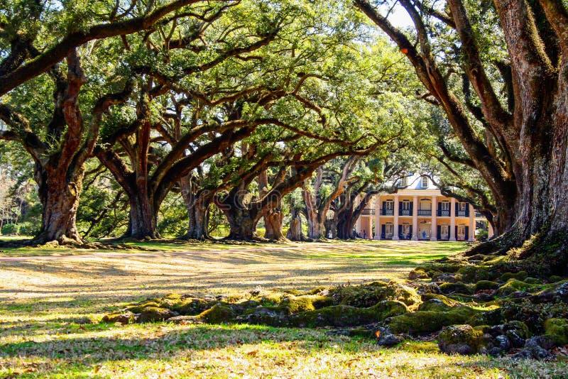 Louisiana plantation with a beautiful line of oaks stock image