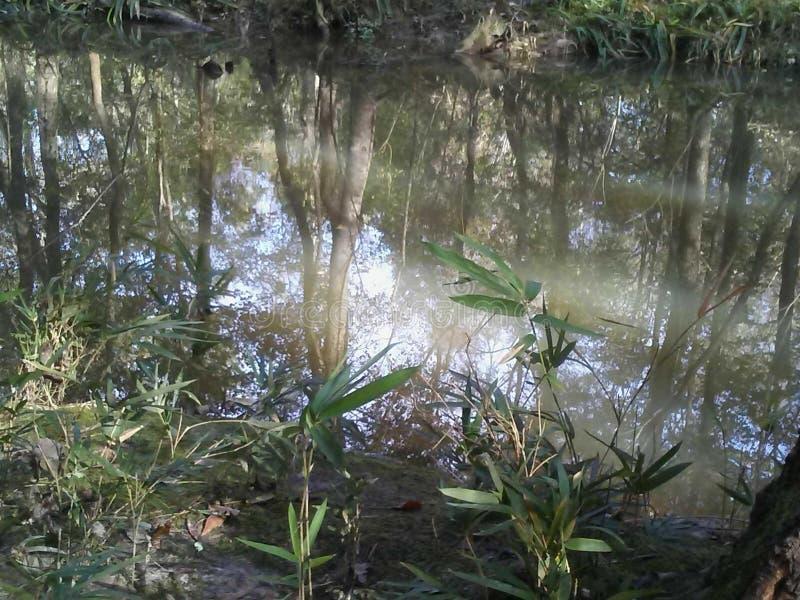 Louisiana-Sümpfe im November lizenzfreie stockbilder