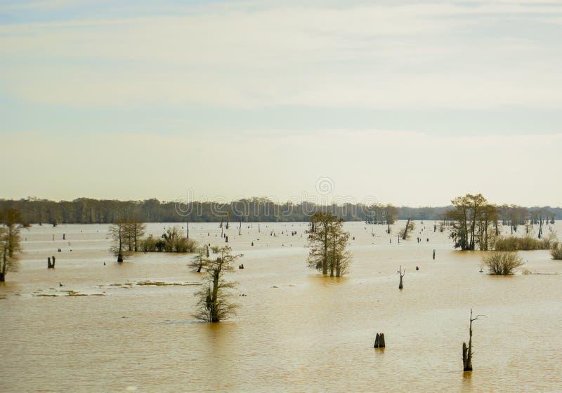 Louisiana-Sümpfe stockfotografie
