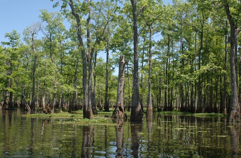 Louisiana-sumpfiger Flussarm stockfotografie