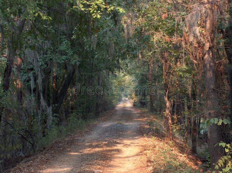 Louisiana-Sumpfstraße stockbild