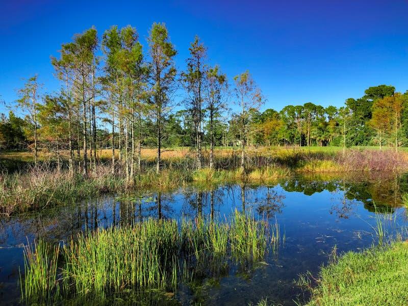 Louisiana-Sumpfteich lizenzfreies stockbild