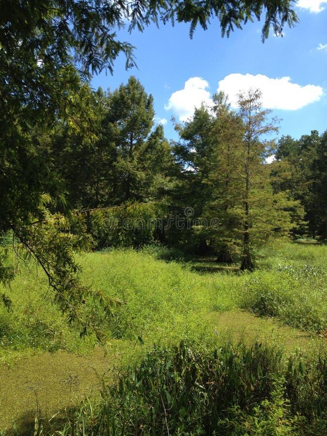 Louisiana Swamp royalty free stock images