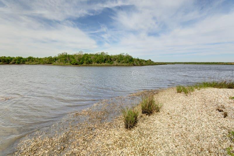 Louisiana Wetlands royalty free stock photo