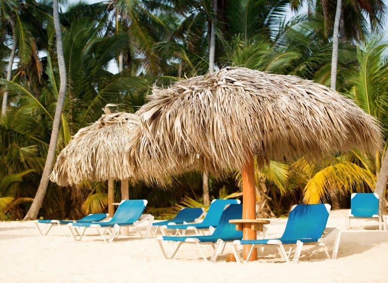 Loungers под пальмой выходят зонтики на пляж стоковые изображения rf