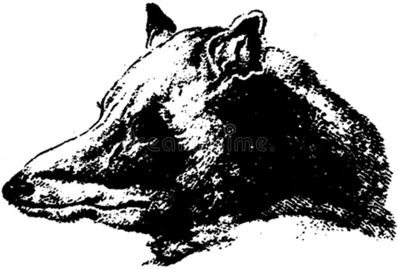 Loup-005-pl Free Public Domain Cc0 Image