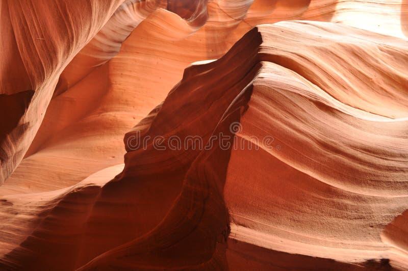 Loup de désert de gorge d'antilope photographie stock libre de droits