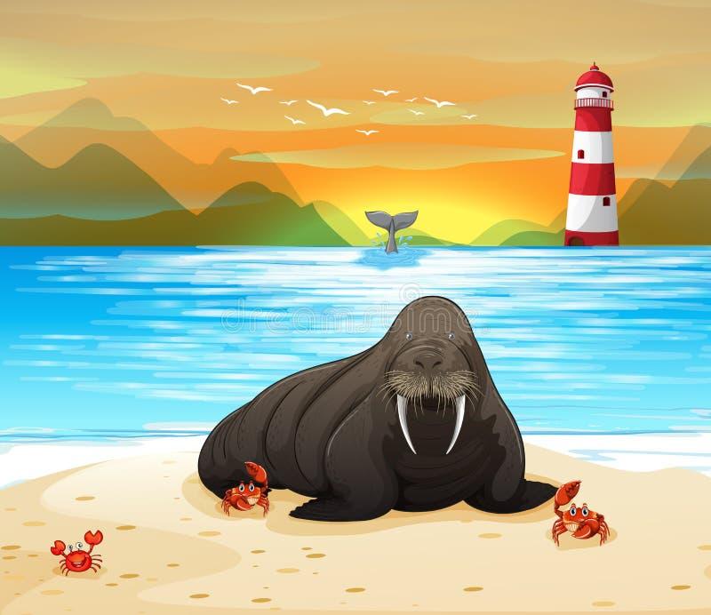 Loup de mer 2 illustration de vecteur