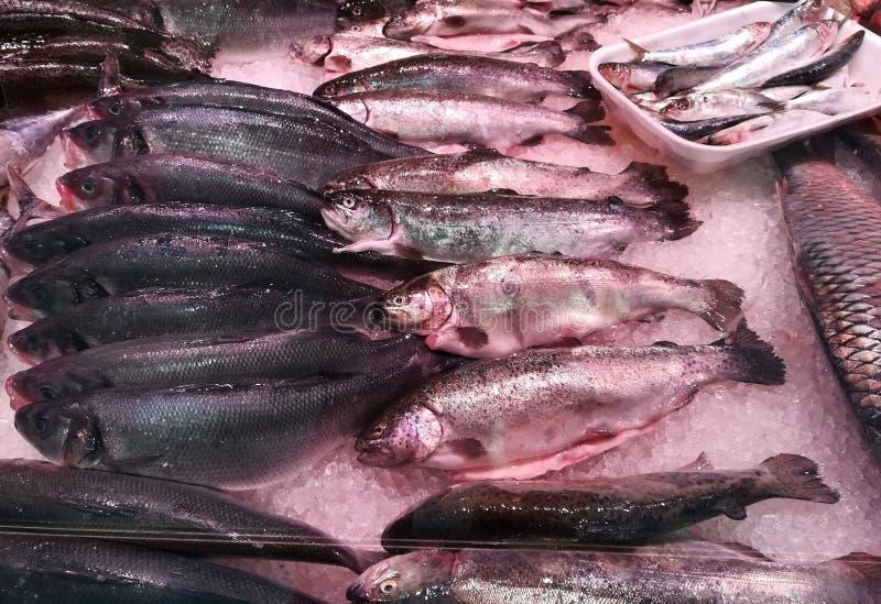 Loup de mer, bar de mer et sardines photos libres de droits