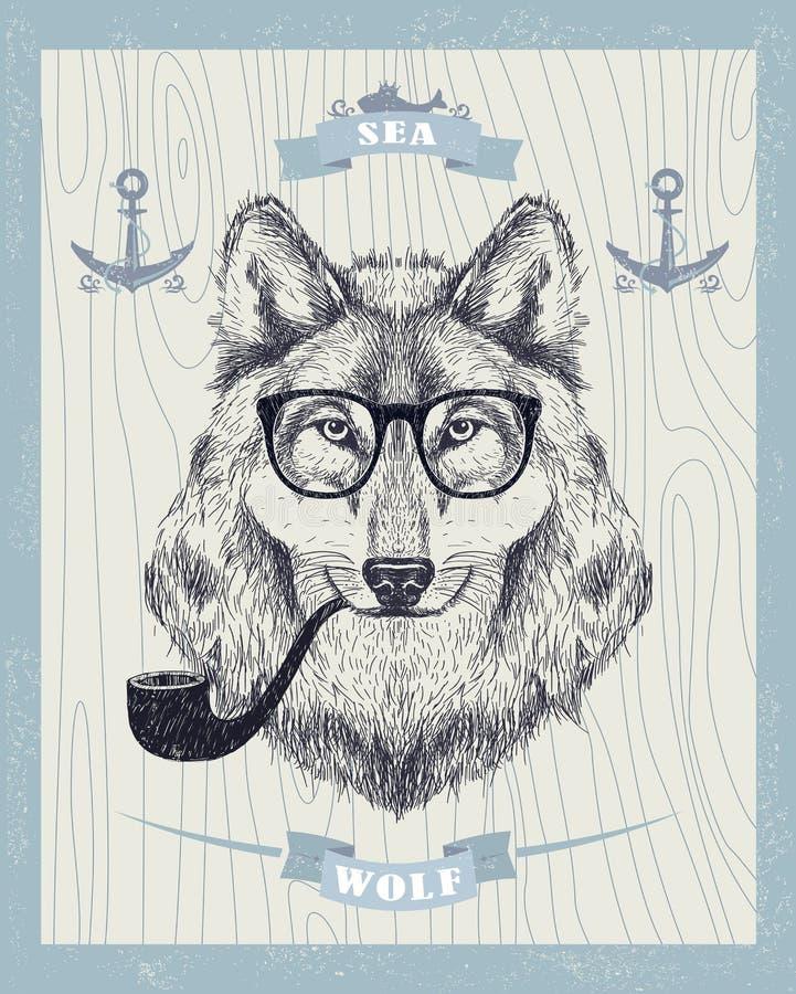 Loup de tabagisme de hippie avec les lunettes de soleil et le tuyau de tabac illustration libre de droits