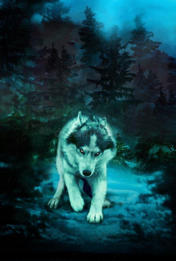 Loup mauvais dans une forêt foncée illustration libre de droits
