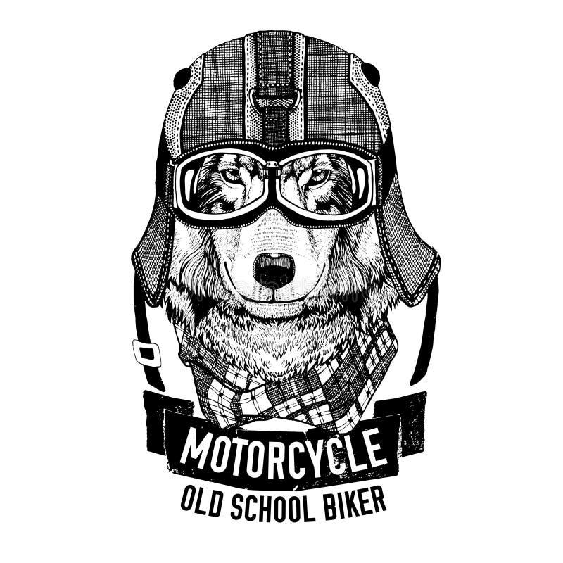 LOUP sauvage pour la moto, T-shirt de motard illustration de vecteur