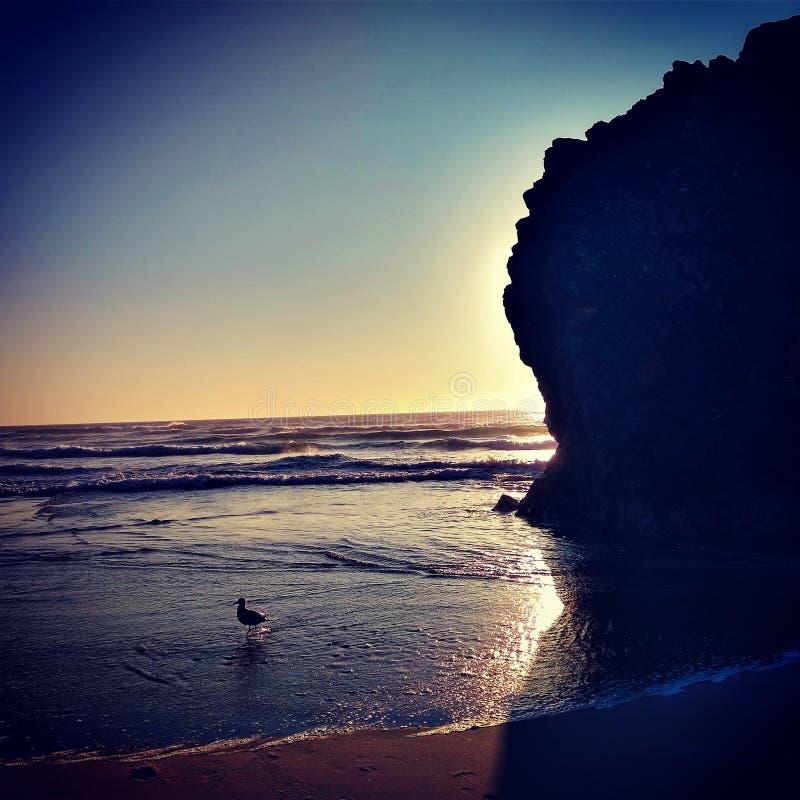 Loup solitaire en mer photographie stock libre de droits