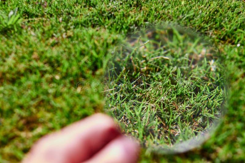 Loupe observant l'herbe image libre de droits