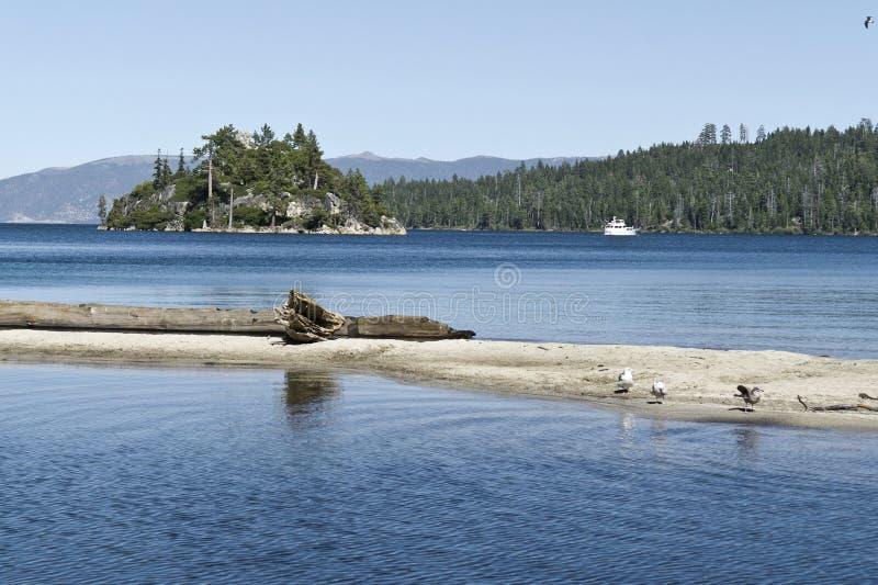 Louro da esmeralda, Lake Tahoe fotografia de stock royalty free